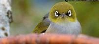 این پرندگان انگری برد های واقعی هستند (عکس)