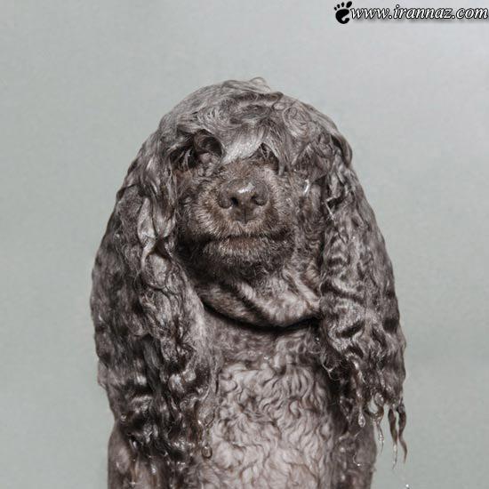 عکس های گرفته شده از این سگ های عجیب