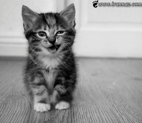عکس هایی از گربه های ملوس و زیبا