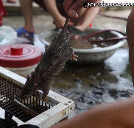 عکس هایی از کباب کردن موش در ویتنام