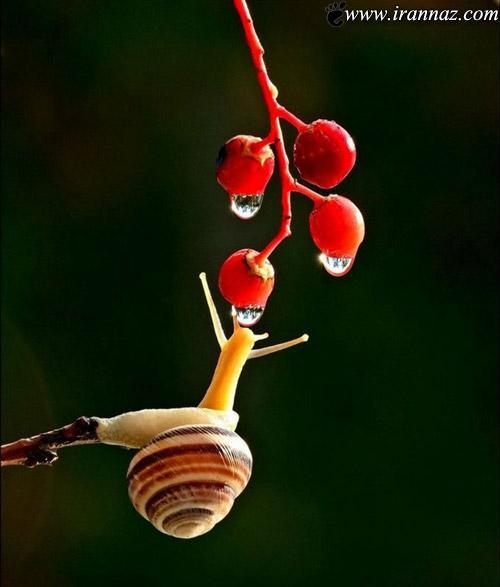 عکس های بسیار زیبا و دیدنی از حلزونها