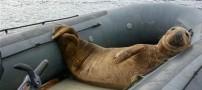 این فیل دریایی ماه عسل این زوج را خراب کرد (عکس)