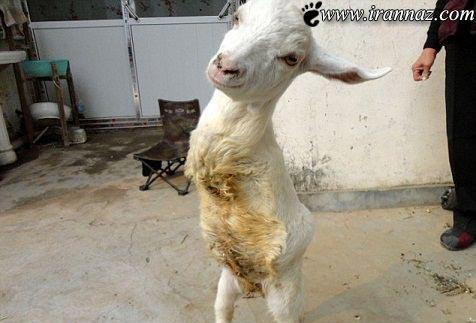 این حیوان بی گناه نماد زندگی است (عکس)