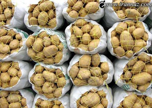 خرید سیبزمینی، دانهای 100,000 تومانی (عکس)