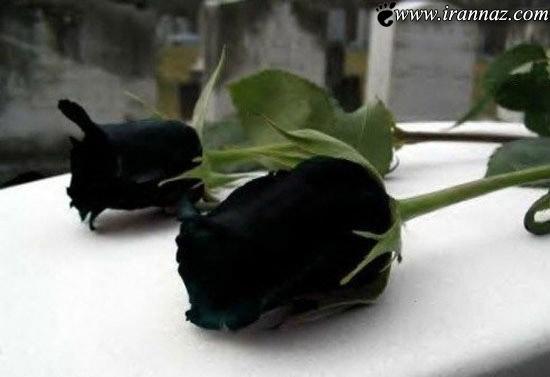 تا به حال چنین گل هایی را دیده بودید؟ (عکس)