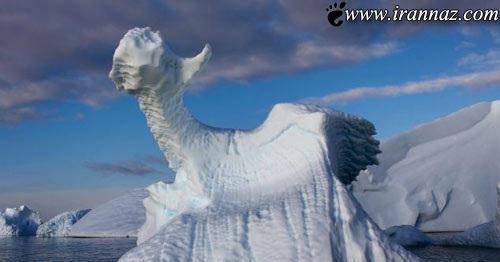 پیدا شدن اژده های بسیار زیبا در قطب (عکس)
