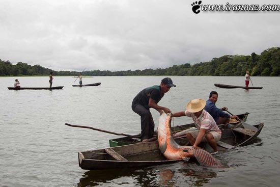 عکس های باورنکردنی از شکار بزرگترین ماهی دنیا