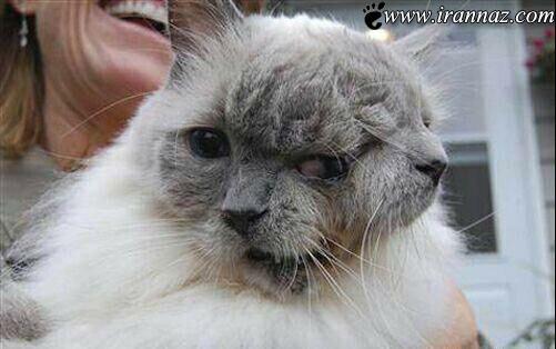 پیرترین گربه دوسر جهان را مشاهده کنید (عکس)