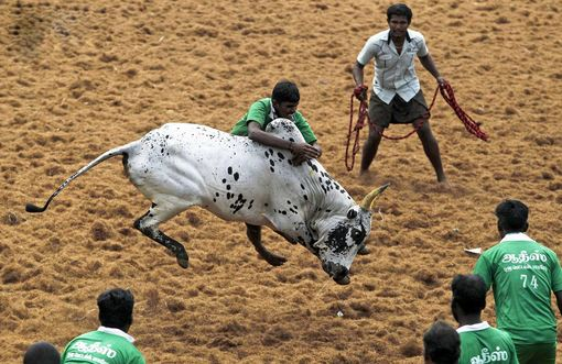 جوانان هندی برای مرد شدن باید این کار رو انجام بدن!!