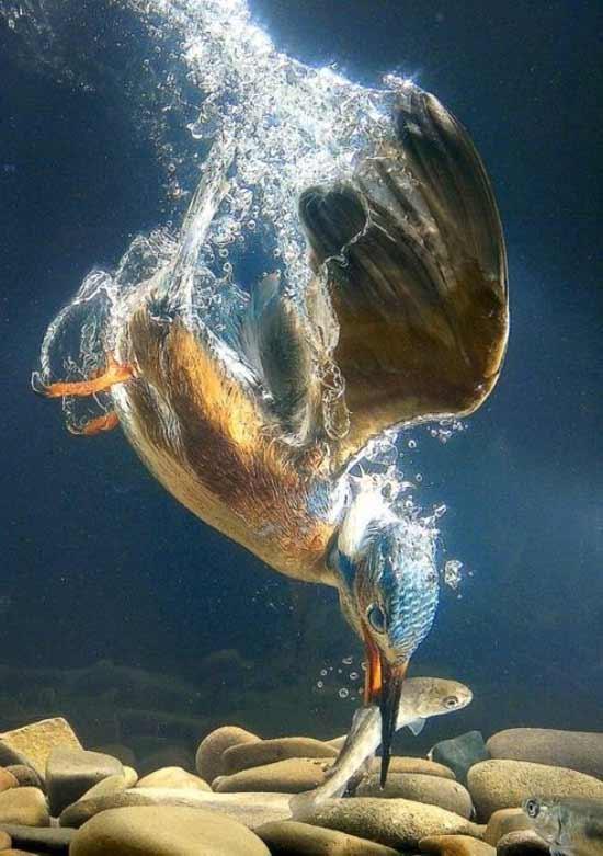 عکس های بسیار زیبا از دنیای شگفت انگیز حیوانات
