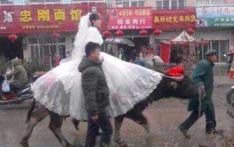 روش جالب رفتن این عروس خانم به خانه بخت! (عکس)