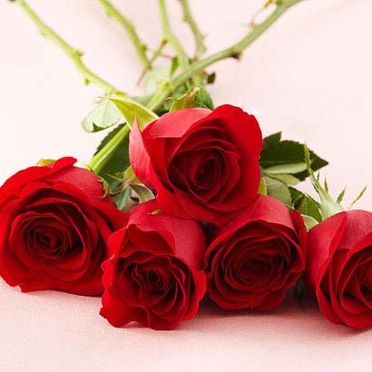 عکس عاشقانه گلها