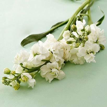 گل های زیبا و معنی آن ها برای هدیه دادن (عکس)