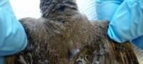 این مزرعه بی رحمانه پرندگان را می سوزاند! (عکس)