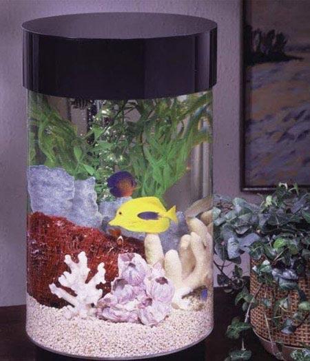 تنگ ماهی عید را اینگونه تزئین و جلوه دار کنید (عکس)