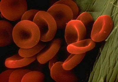 اعضای بدن در نمای میکروسکوپ چقدر عجیبند! (عکس)