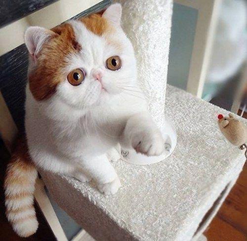 این گربه همه را مجذوب خود کرده است! (عکس)