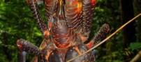 این موجود ترسناک عاشق نارگیل است! (عکس)