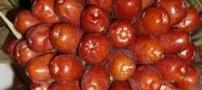اغذیه ای برای درمان آرتروز