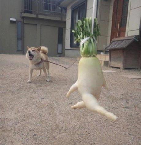 عکس های جالب و خنده دار از سبزیجات