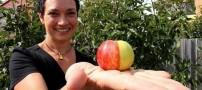 رویش یک سیب عجیب و جالب (عکس)