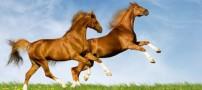 حل معمای جالب معامله اسب ها