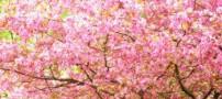 اشعاری درباره بهار از فریدون مشیری
