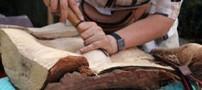 معرفی و آشنایی بیشتر با هنر زیبای کنده کاری چوب