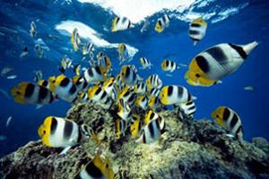 آیا می دانید ماهی ها چگونه در آب نفس می کشند؟