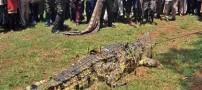 حیوانی غول پیکر که جان 4 نفر را گرفت! (عکس)