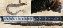 وجود یک هزار پای 15 سانتی در شکم این مار! (عکس)