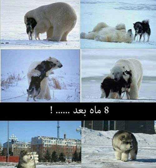 عکس نوشته های طنز و بسیار بامزه