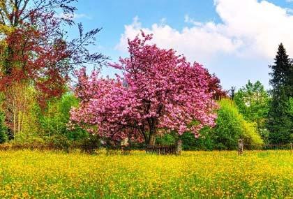 تصاویری زیبا و دیدنی از طبیعت بهار