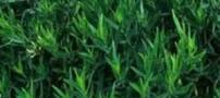 معرفی چند گیاه پرخاصیت برای زنان