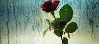 باران بهاری داروی مناسب برای افسردگی
