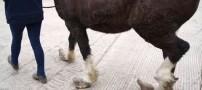 تصاویری از یک اسب با سم های عجیب و غریب