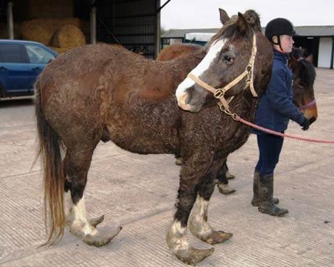 تصاویری از یک اسب با وضعیتی دردناک !!!