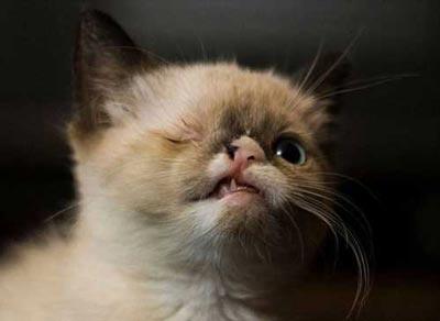 شهرت گربه  تک چشمی در دنیای اینترنت (عکس)