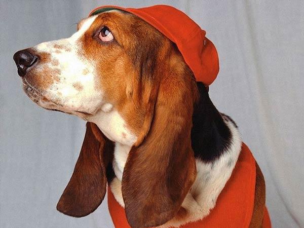 تصاویری جالب و بامزه از سگ های زیبا