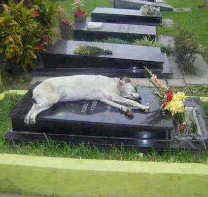 این سگ 7 سال روی قبر صاحبش خوابید!! (عکس)