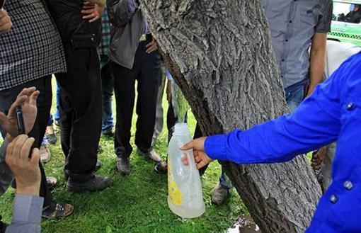 تصاویری بسیار جالب از جوشیدن آب از تنه یک درخت