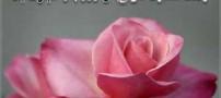 متن های زیبا و عاشقانه برای تبریک روز مرد و پدر