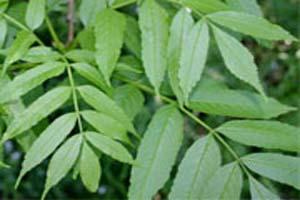 داروهای گیاهی موثر برای درمان یبوست