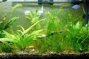 توصیه هایی درباره گیاهان آکواریومی که باید بدانید