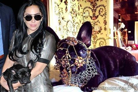 سگ طلاپوش لیدی گاگا برایش خبرساز شد (عکس)