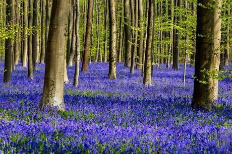 طبیعت شگفت انگیز با گل های آبی (عکس)