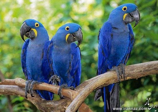 با زیبا و گرانترین پرنده های دنیا آشنا شوید (عکس)
