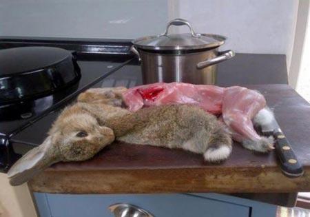 اقدام بی رحمانه این خانم با خرگوش! (عکس)