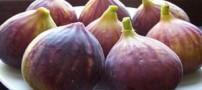 انجیر و خواص این میوه خوشمزه