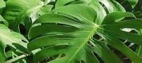 آشنایی با رشته تکنولوژی تولیدات گیاهی